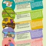 Seguridad Alimentaria. Frutas y verduras