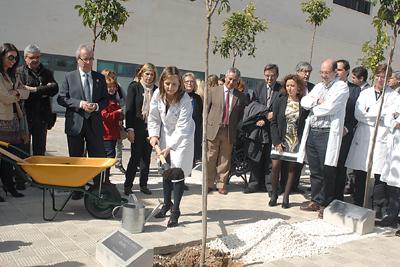 La directora gerente del hospital contribuye a la plantación del naranjo