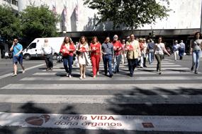 Responsables sanitarios y pacientes trasplantados cruzan el paso de peatones marcado por la donación