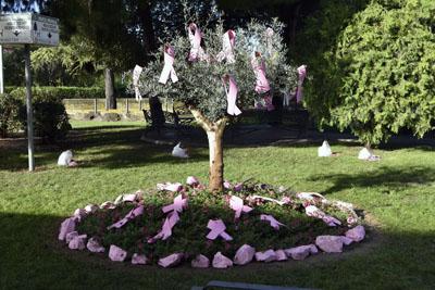Durante la mañana, profesionales y pacientes han colgado lazos rosas del olivo