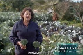 El proyecto Salud con Gusto presente el brócoli en febrero